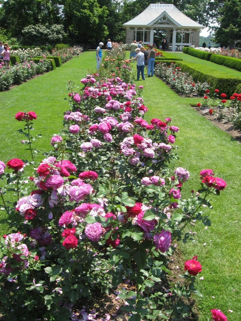 2008 06 21 35 Fellows Gardens Rose Festival.jpg