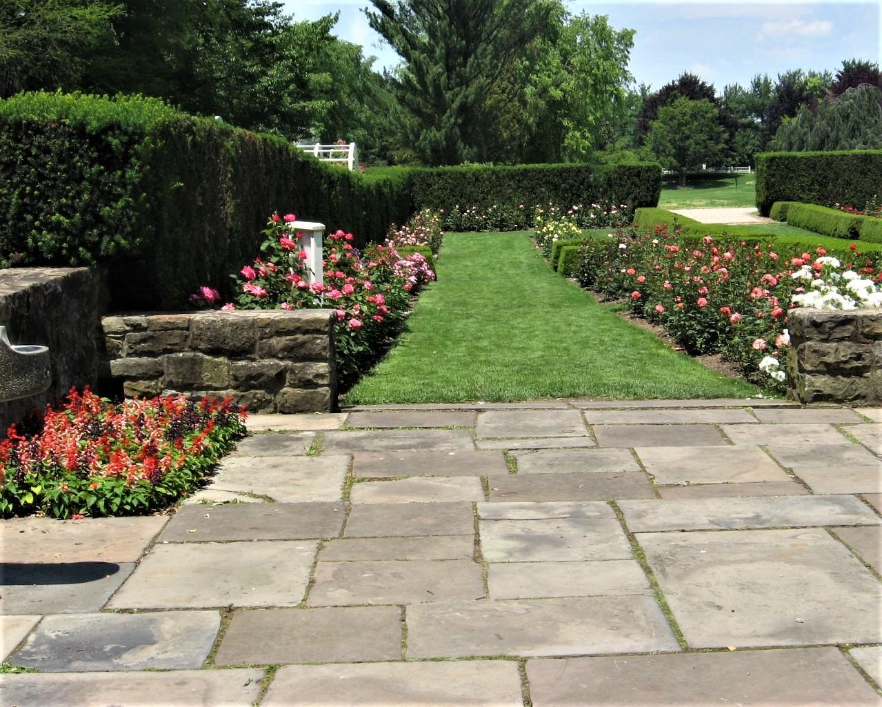 2008 06 21 38 Fellows Gardens Rose Festival.jpg