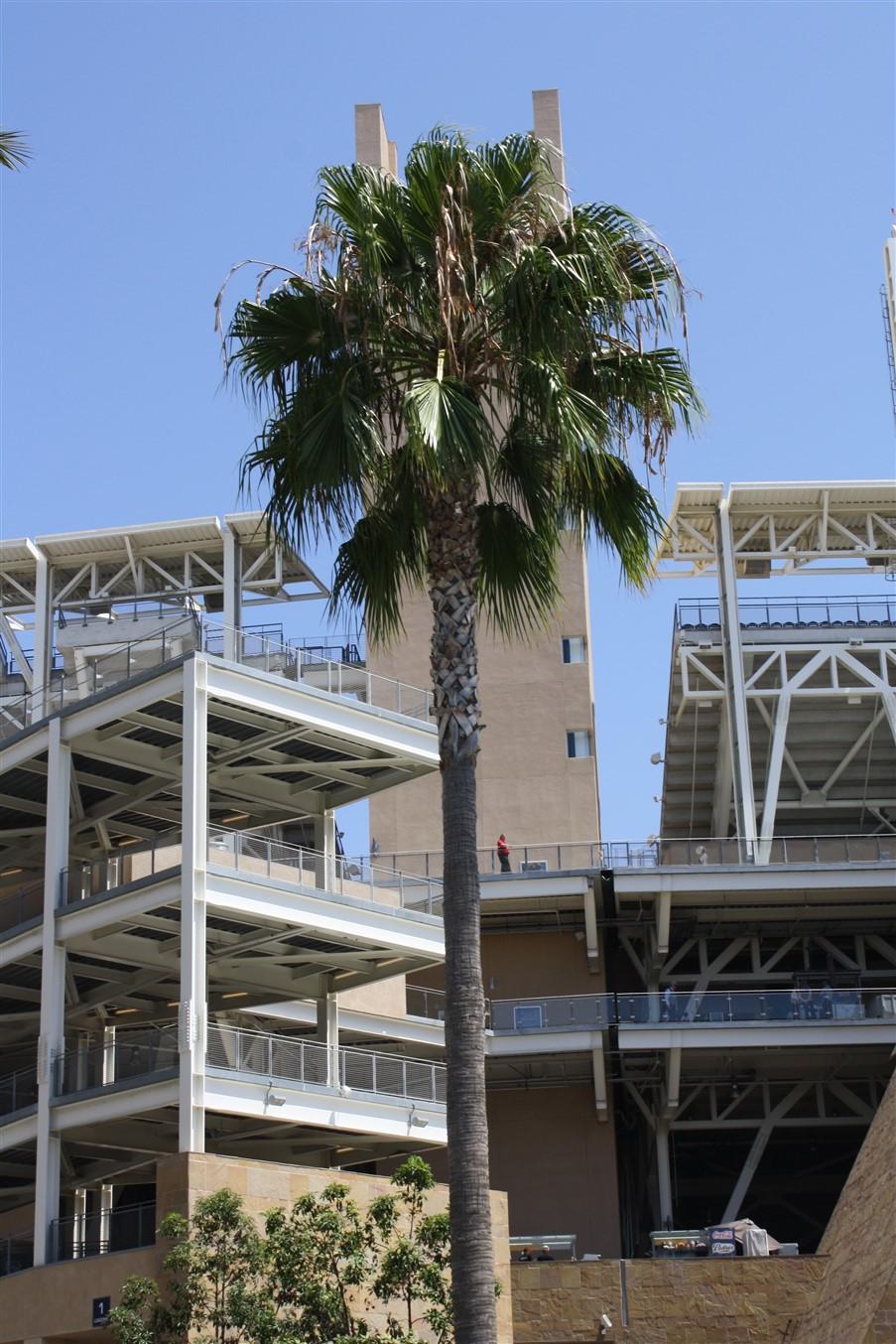 2009 08 23 45 San Diego Petco Field.jpg