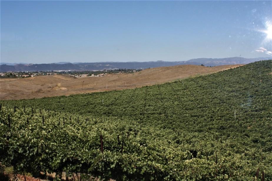 2009 08 24 30 Temecula Winery.jpg