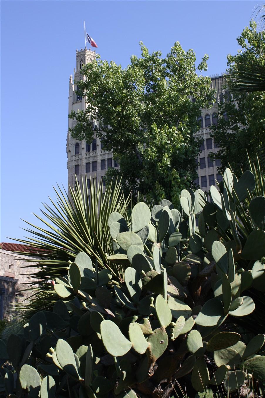 2009 08 27 9 San Antonio Alamo.jpg