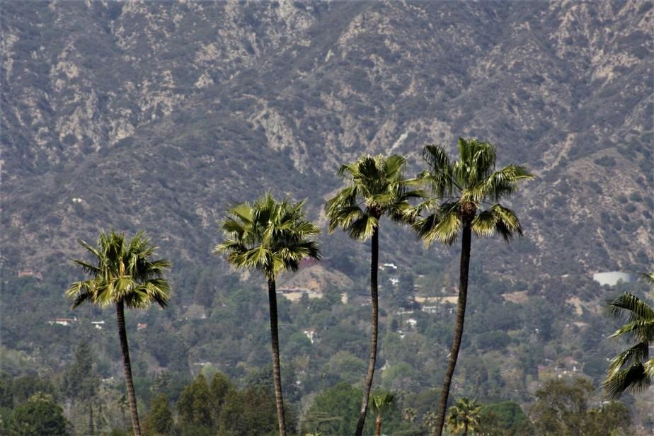 2012 03 11 47 Santa Anita Park.jpg