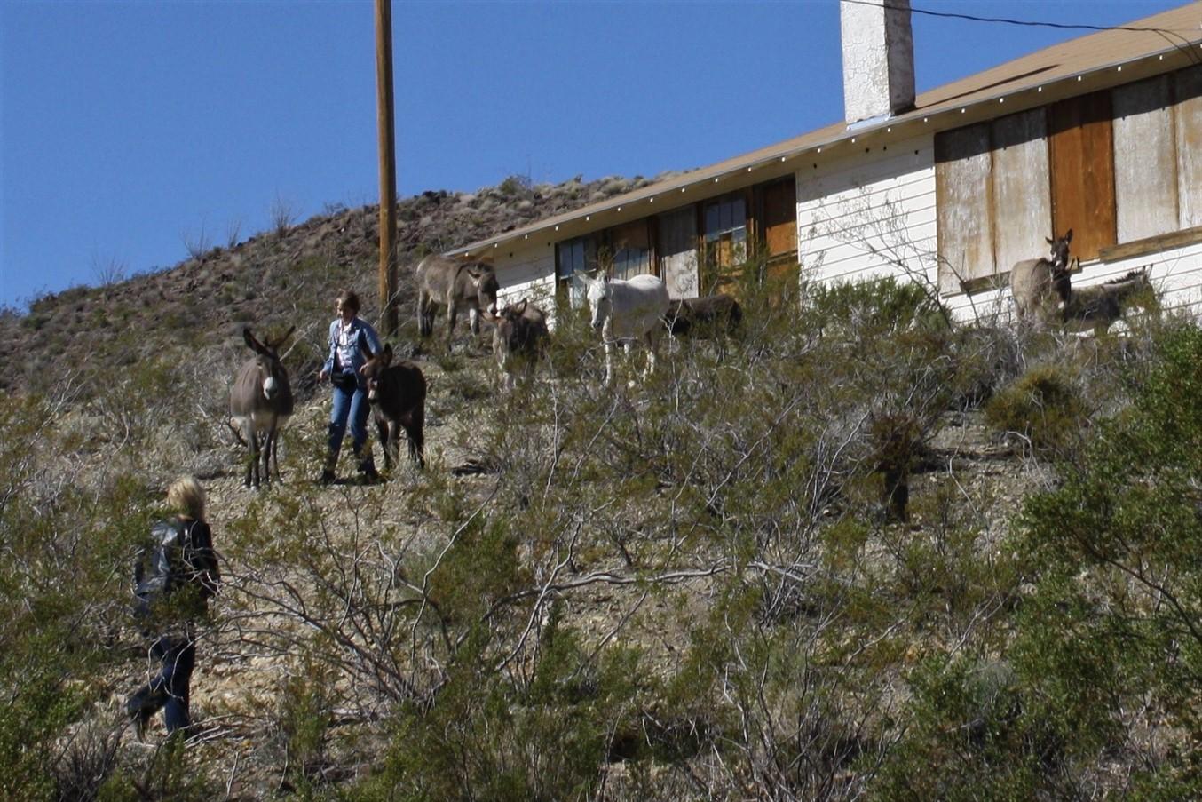 2012 03 14 Route 66 Road Trip 98 Oatman Highway Arizona.jpg