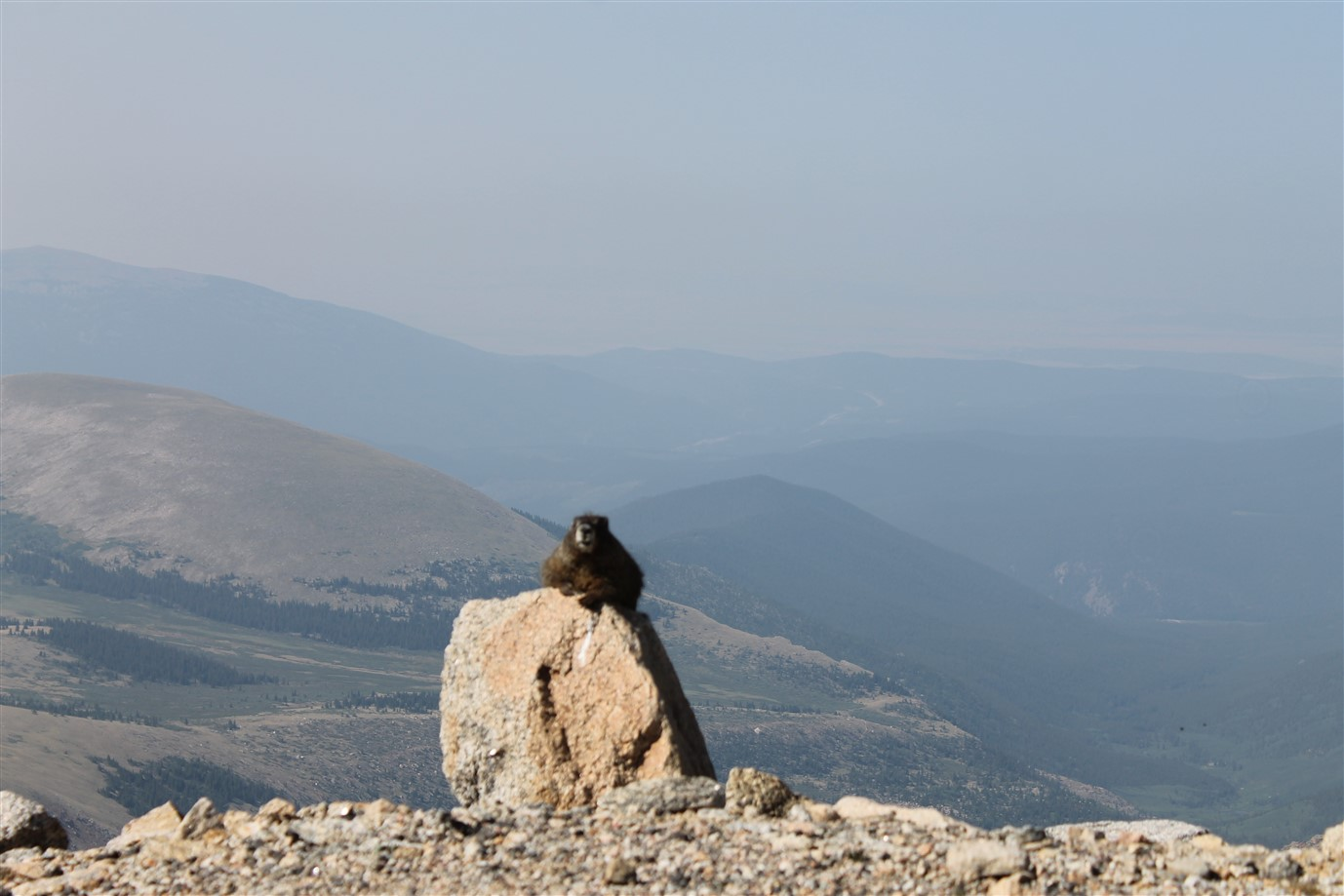 2012 07 05 36 Mt Evans Colorado.jpg