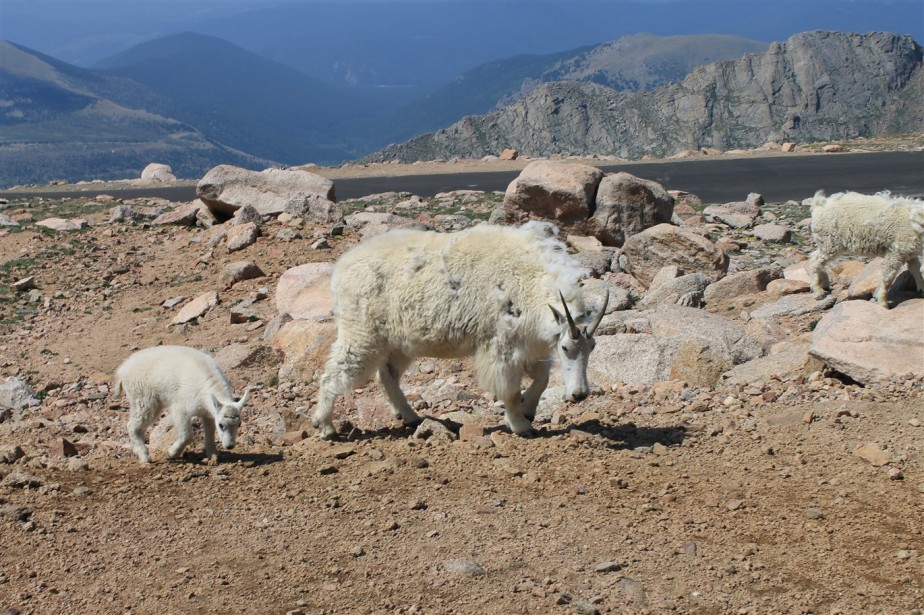 2012 07 05 98 Mt Evans Colorado.jpg