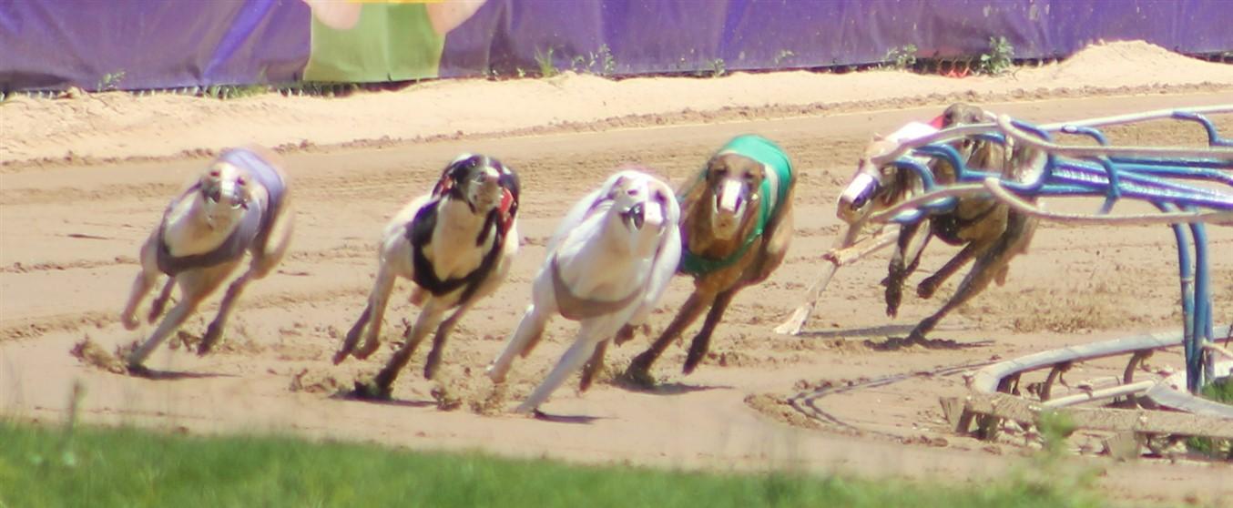 2014 05 25 33 Wheeling Dog Races.jpg