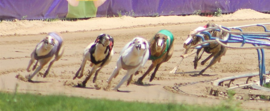 2014 05 25 33 Wheeling Dog Races.jpg
