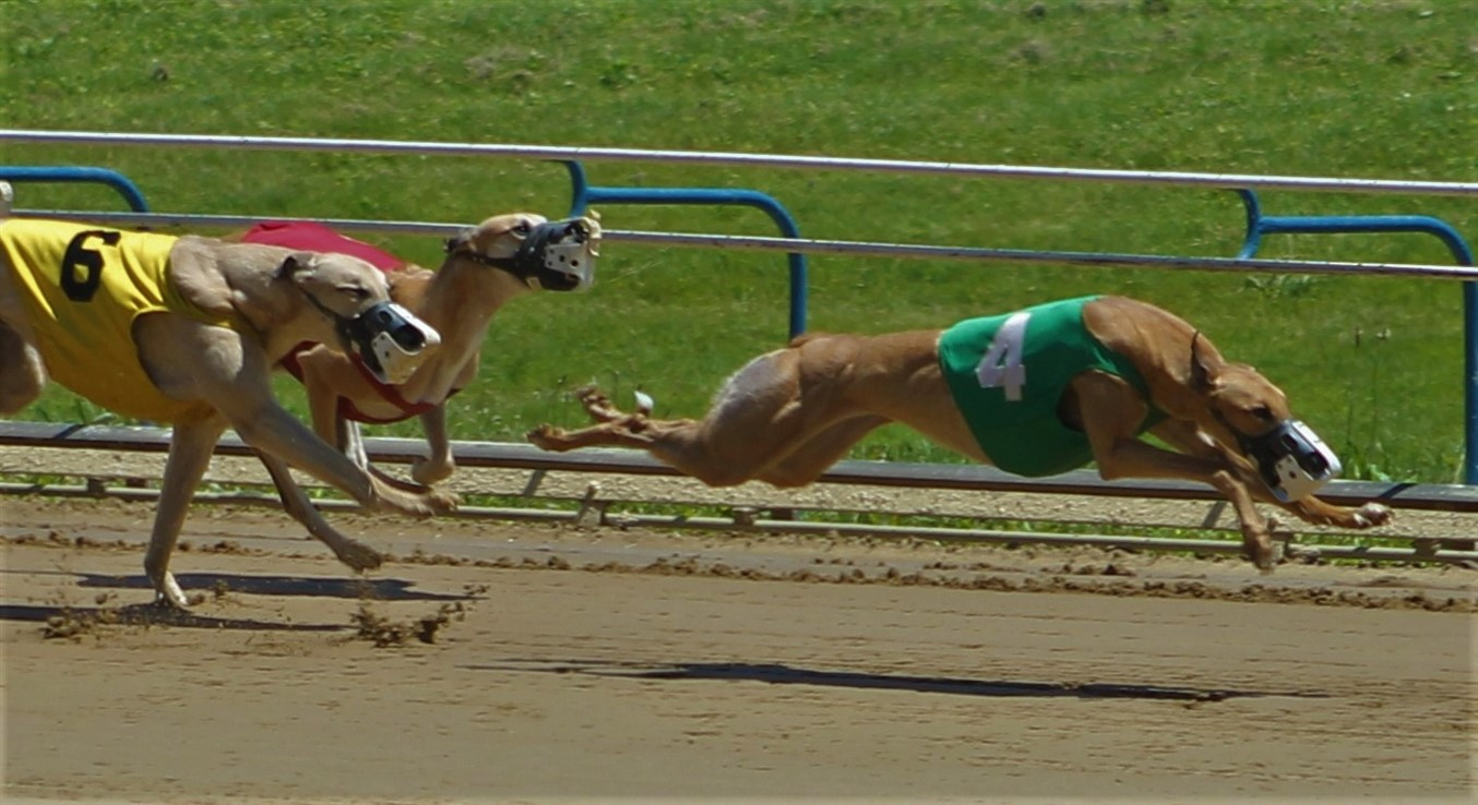 2014 05 25 41 Wheeling Dog Races.jpg