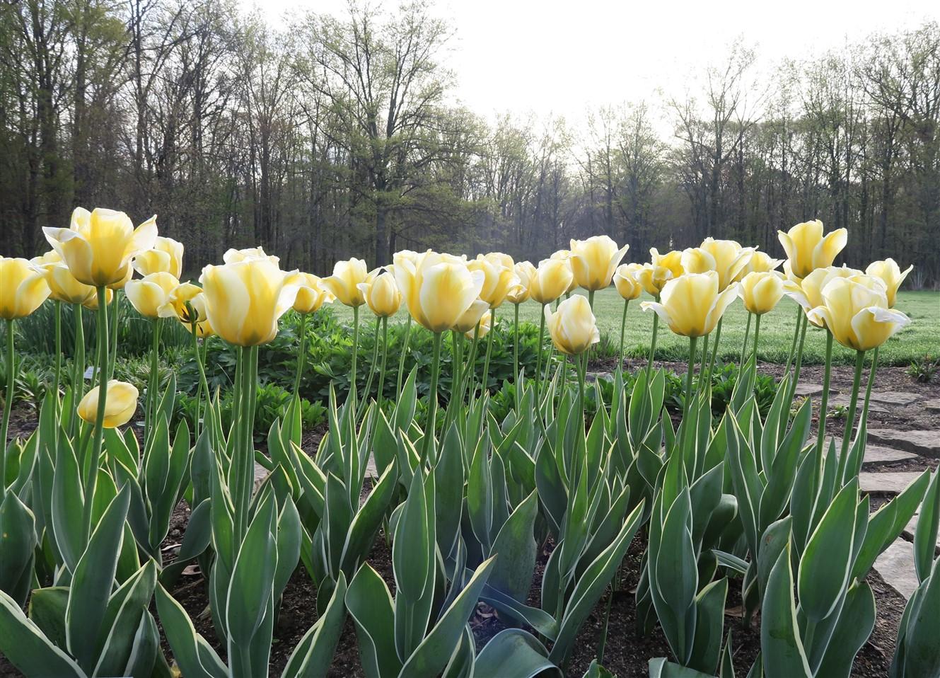 2015 05 02 4 Inniswood Gardens.jpg