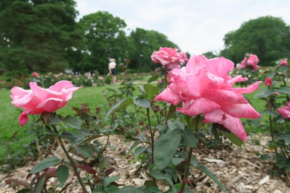 2015 06 07 204 Whetstone Rose Gardens.jpg