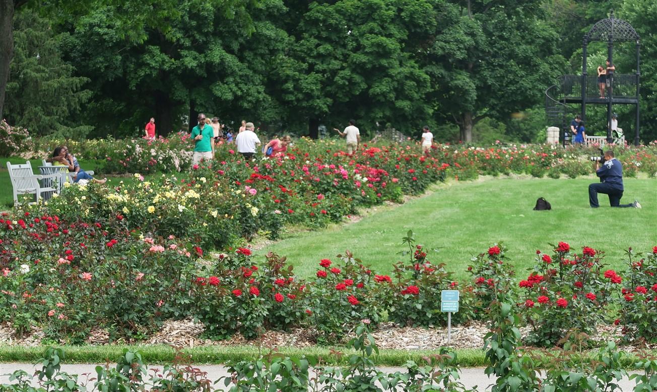 2015 06 07 212 Whetstone Rose Gardens