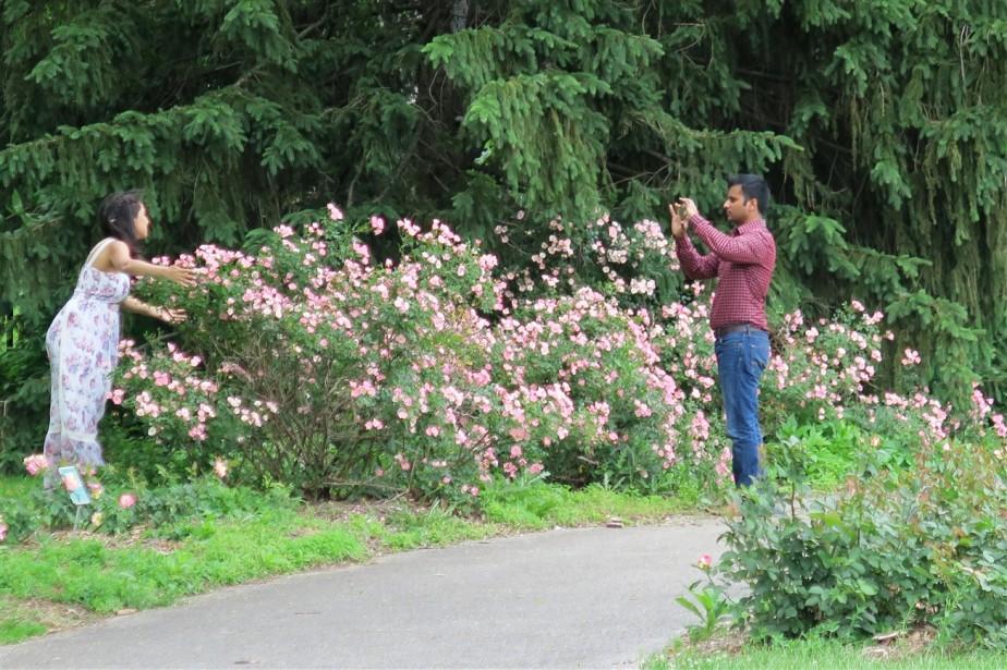 2015 06 07 225 Whetstone Rose Gardens