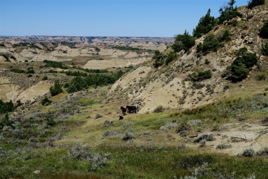 Theodore Roosevelt National Park – National Parks Road Trip – Day5