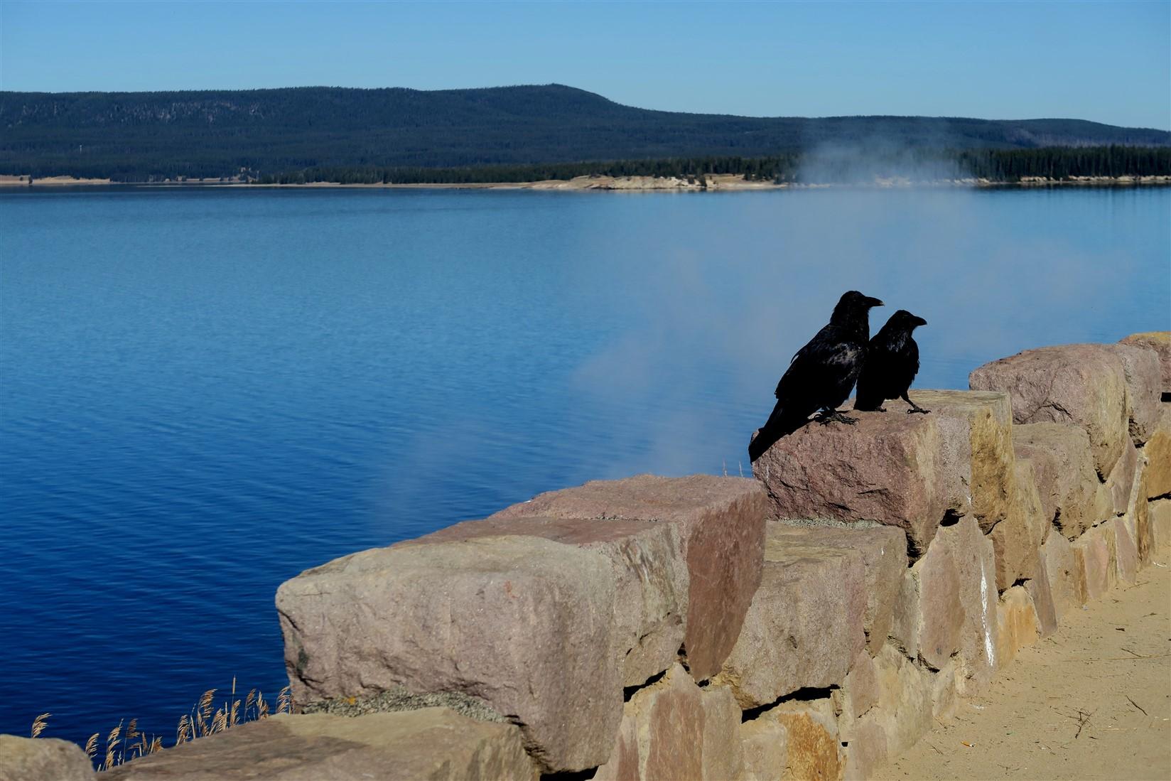 2015 09 11 35 Yellowstone National Park WY.jpg