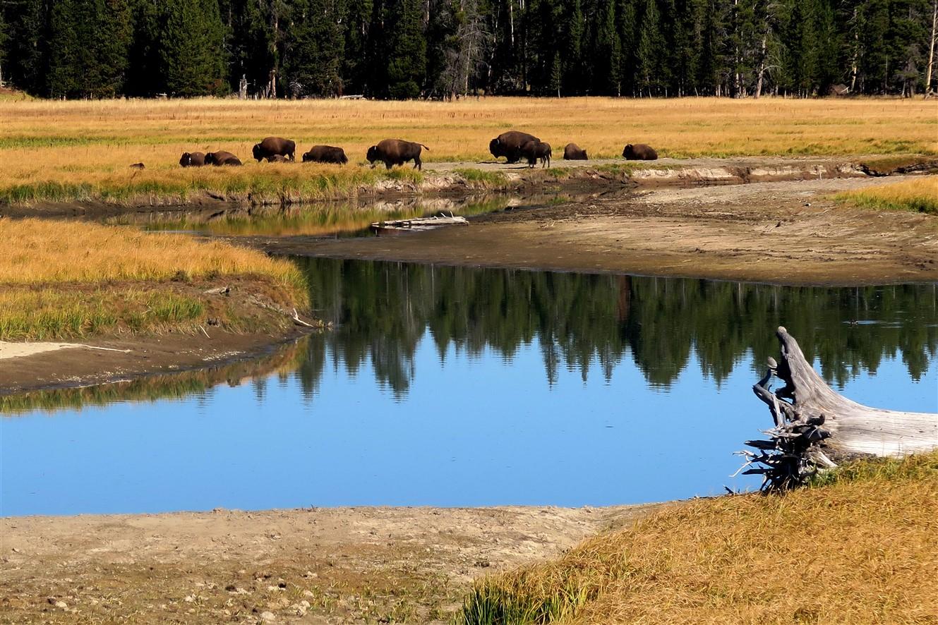 2015 09 11 48 Yellowstone National Park WY.jpg