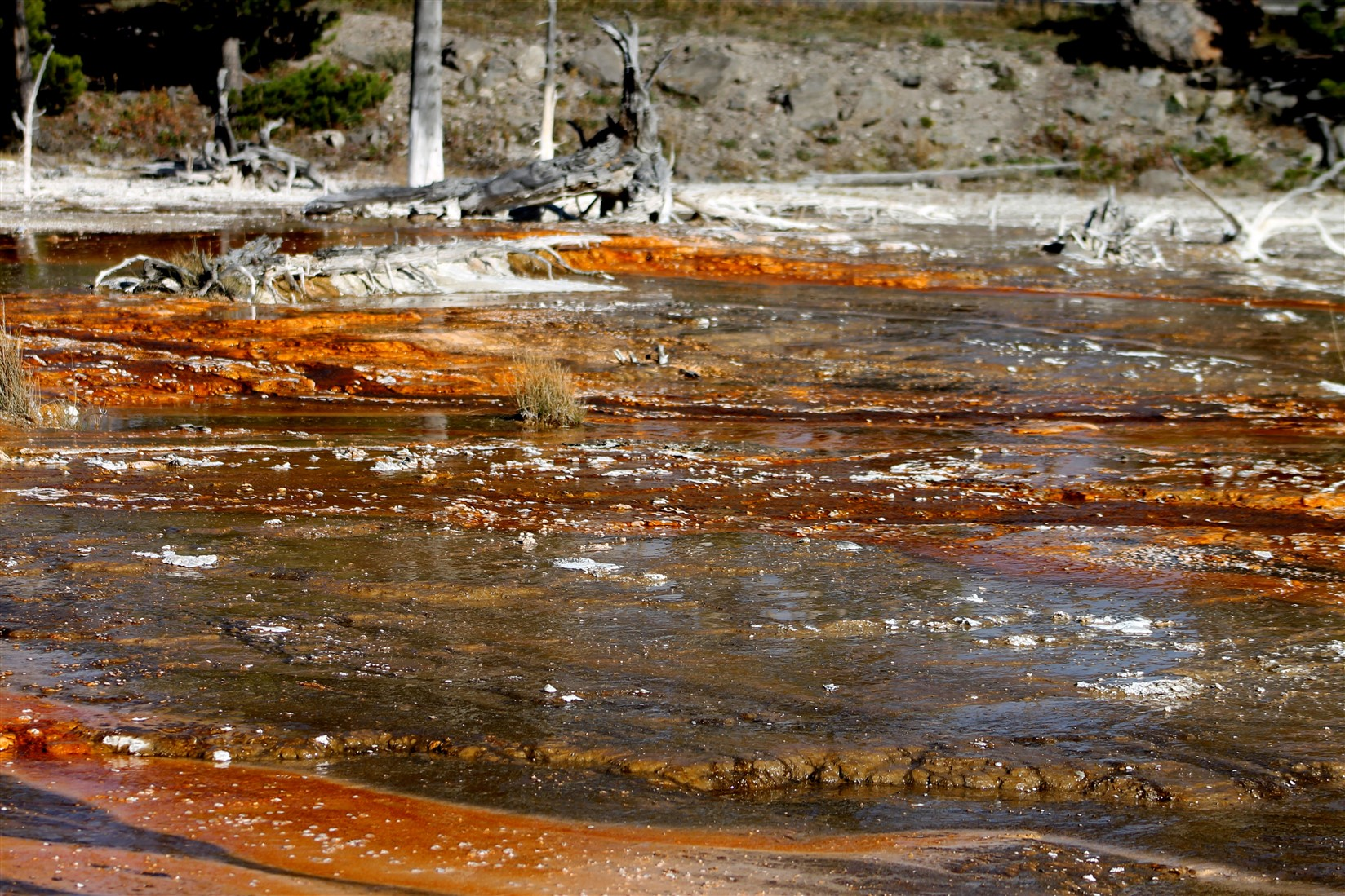 2015 09 12 185 Yellowstone National Park WY