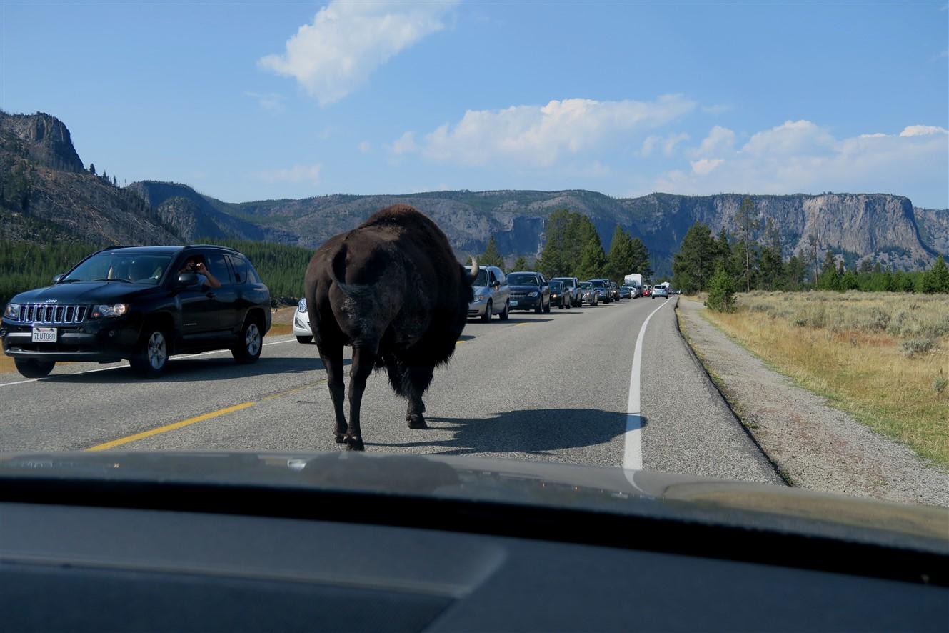 2015 09 13 48 Yellowstone National Park WY.jpg
