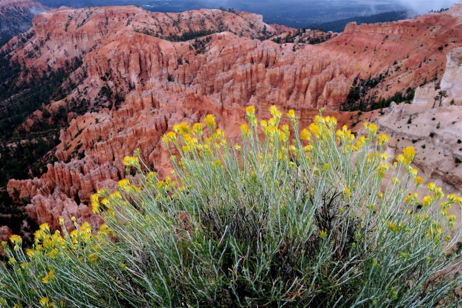 2015 09 16 78 Bryce National Park UT