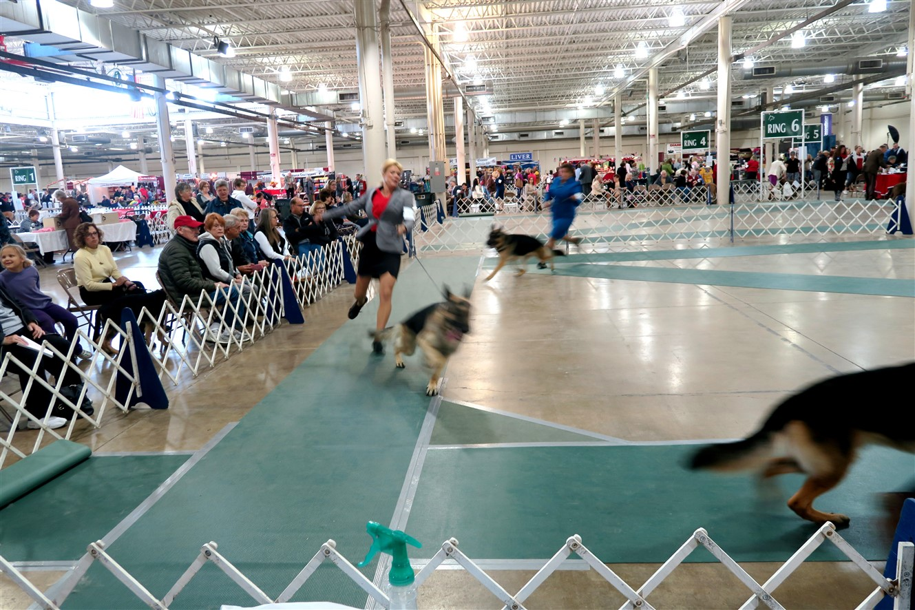 2015 11 15 79 Columbus Fall Dog Show.jpg
