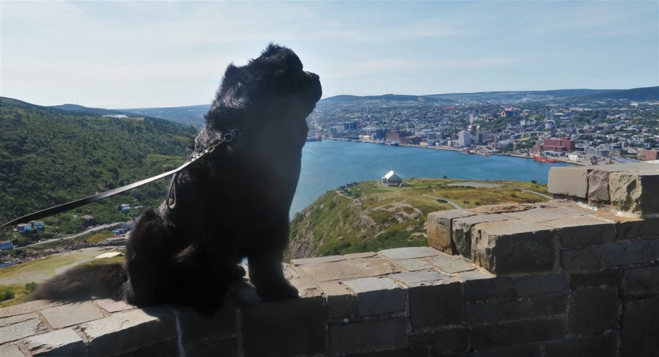St Johns Newfoundland – Late Summer 2016 Road Trip – Day10