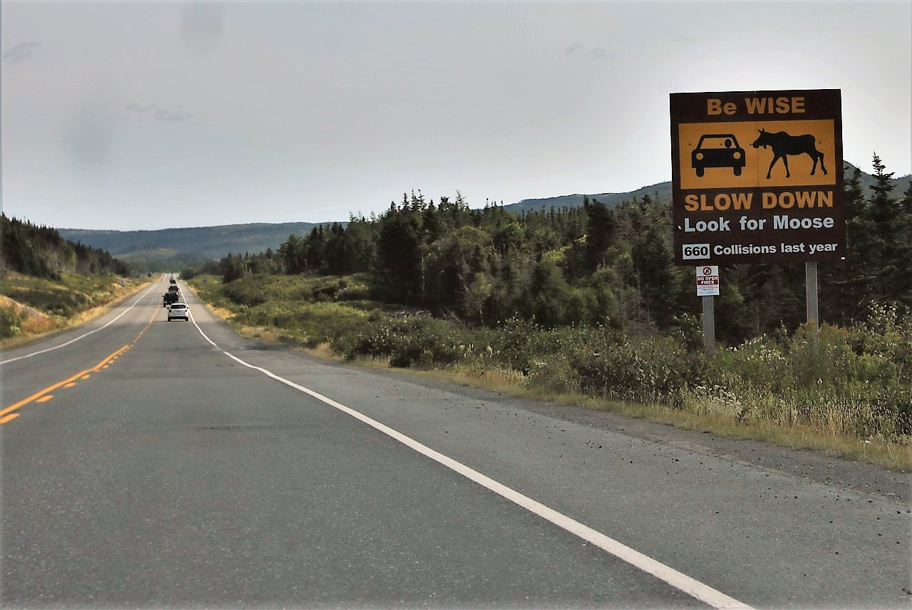 2016 09 05 19 Across Newfoundland.jpg