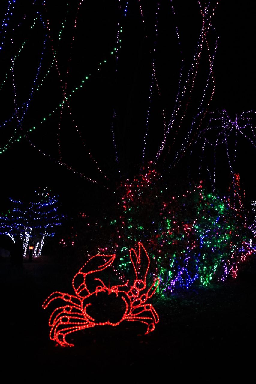 2016 11 18 21 Columbus Zoo Wildlights.jpg