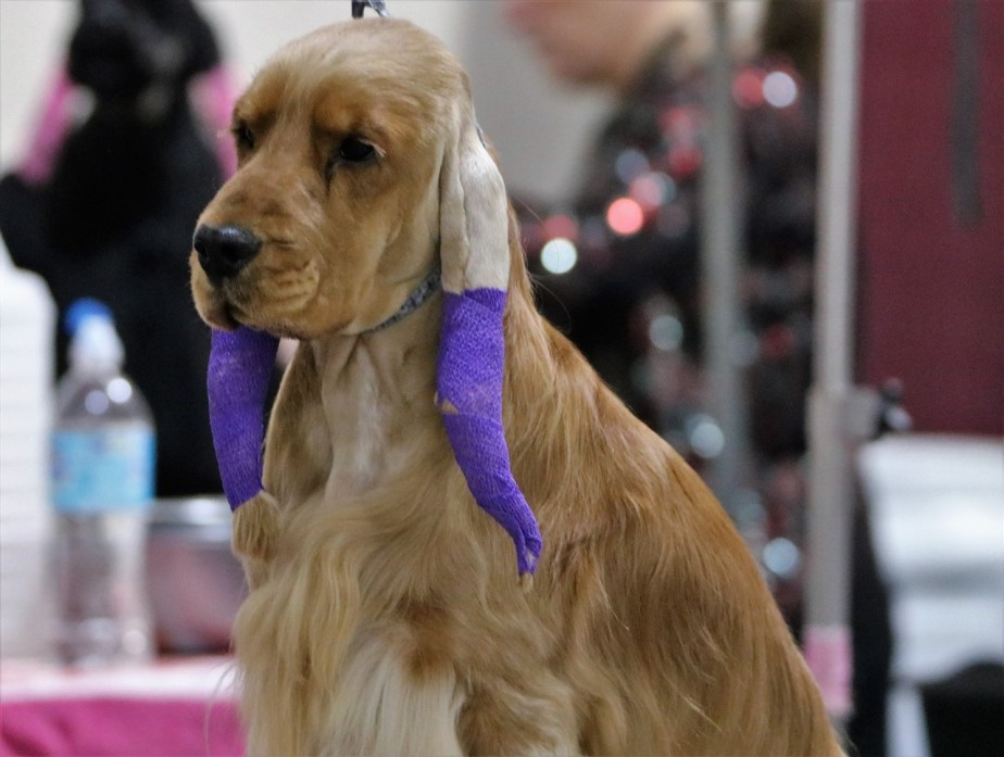 Columbus – November 2016 – Dog Show revisited