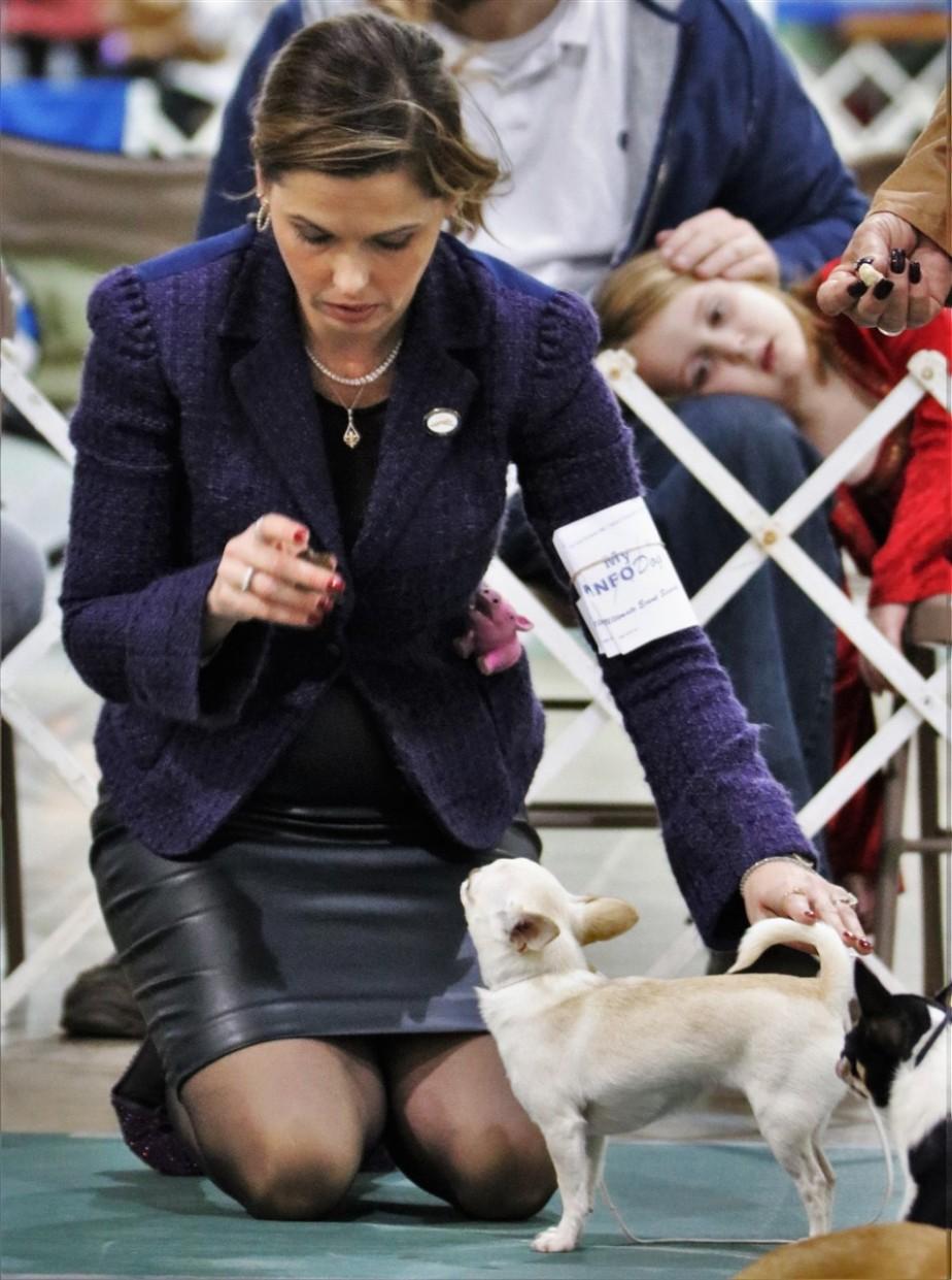 2016 11 20 46 Columbus Dog Show.jpg