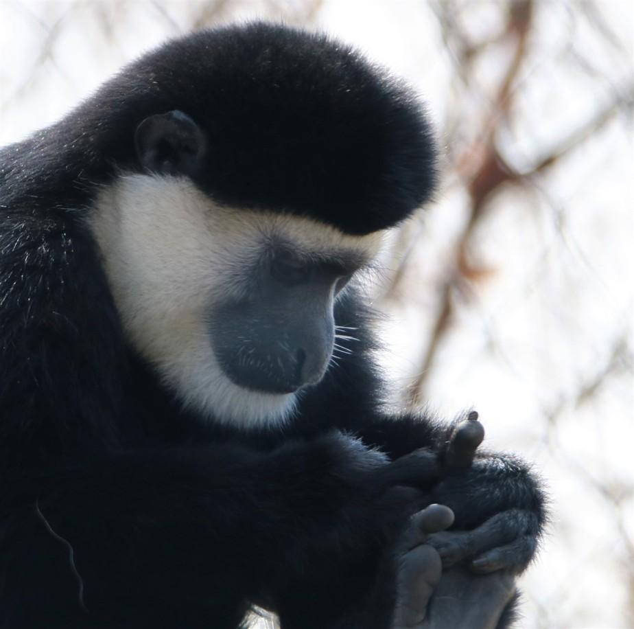 2017 02 20 18 Columbus Zoo.jpg