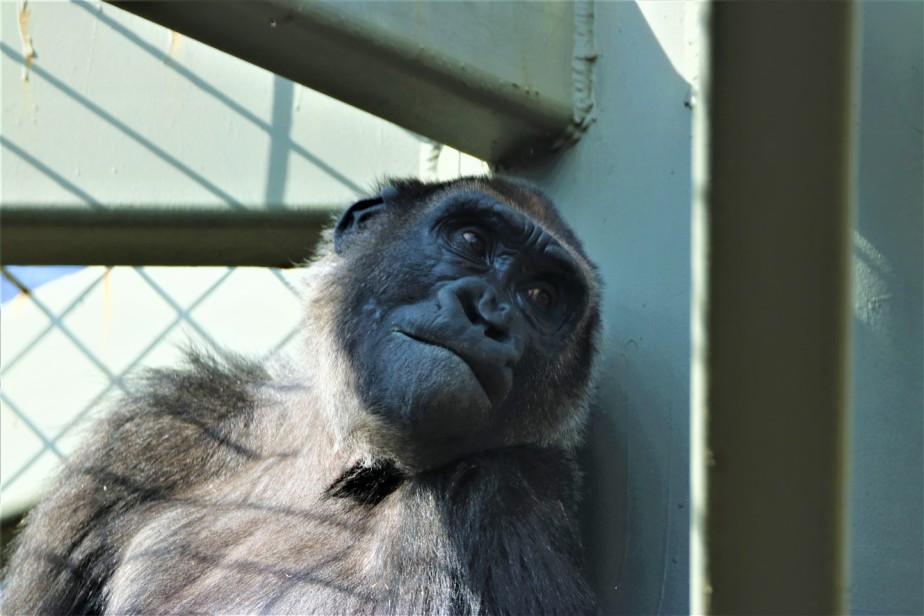 2017 02 20 25 Columbus Zoo.jpg