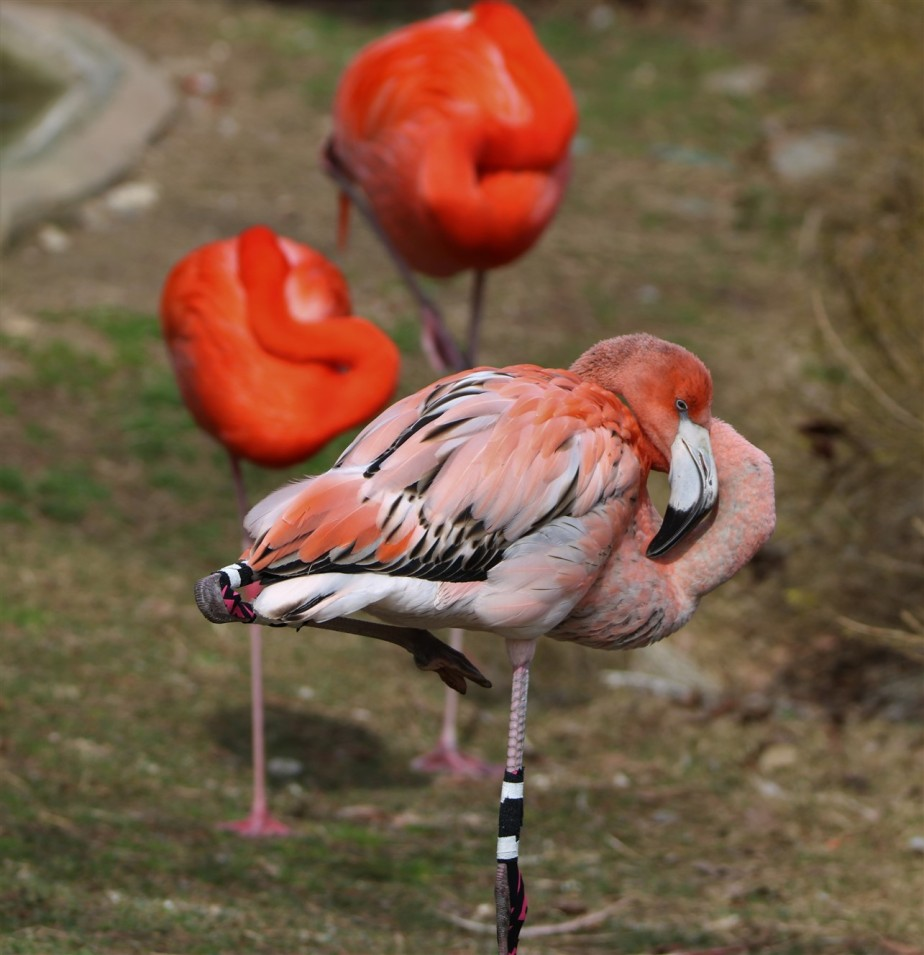 2017 02 20 3 Columbus Zoo.jpg
