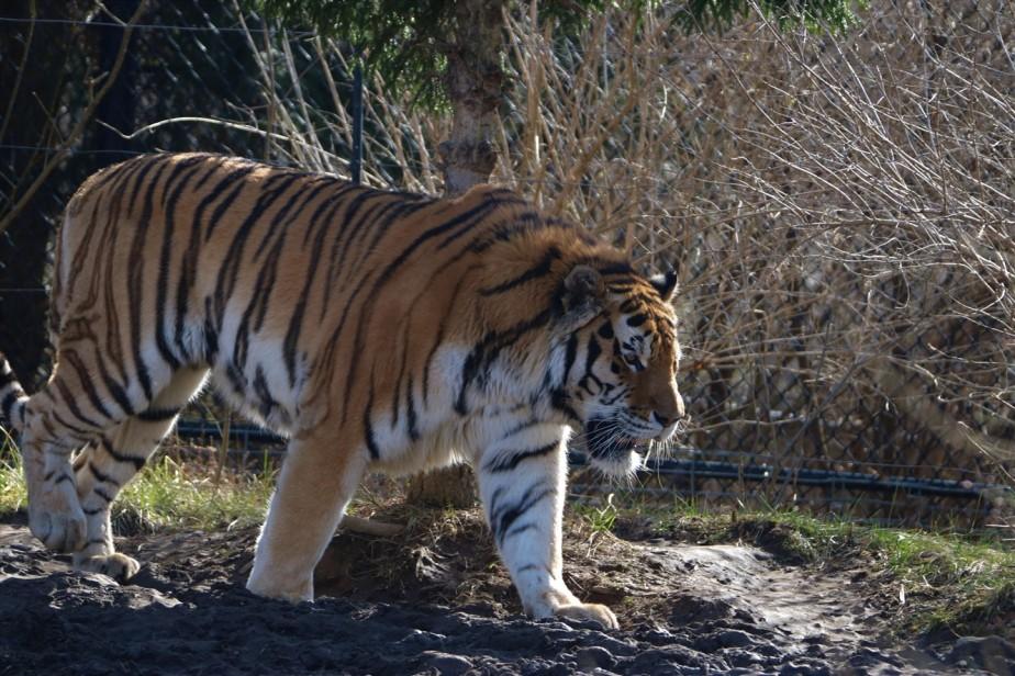 2017 02 20 84 Columbus Zoo.jpg