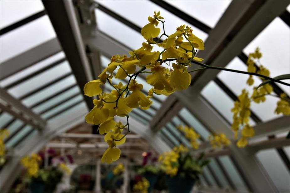 2017 02 25 114 Columbus Franklin Park Conservatory Orchid Exhibit.jpg