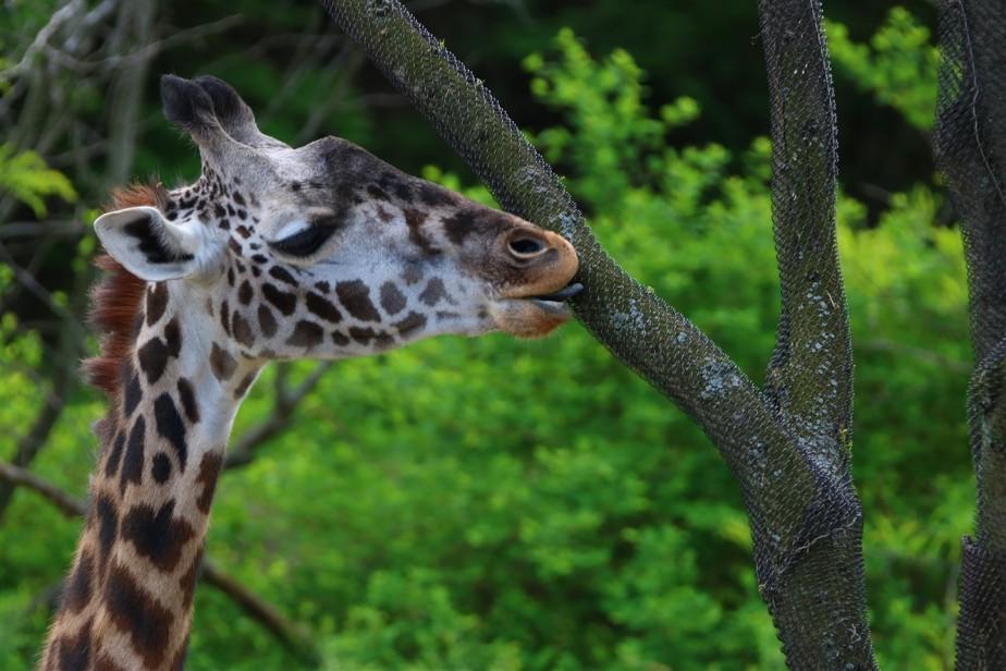 2017 04 23 15 Cincinnati Zoo.jpg