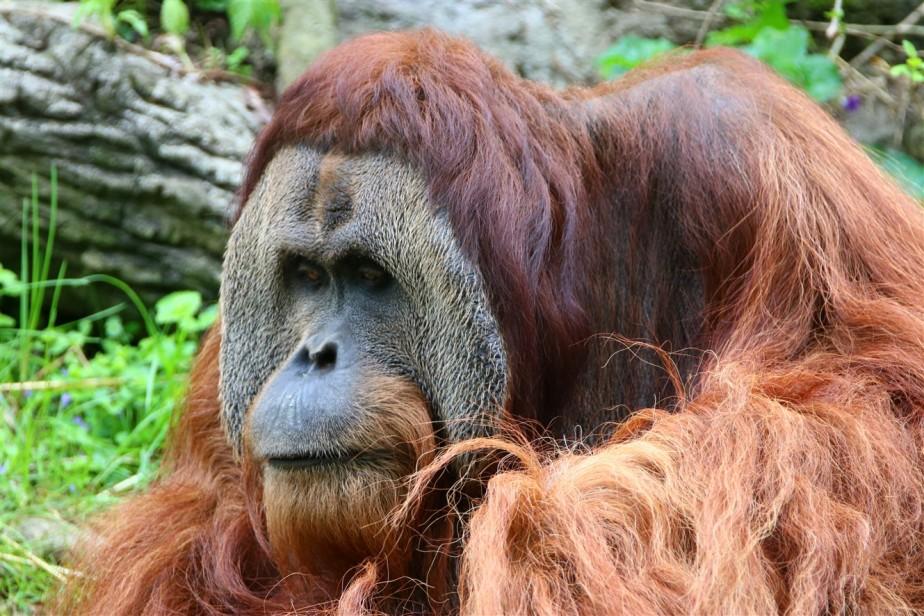 2017 04 23 57 Cincinnati Zoo.jpg