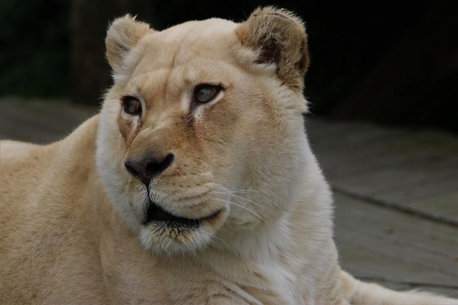 Cincinnati – April 2017 – The Zoo inBloom