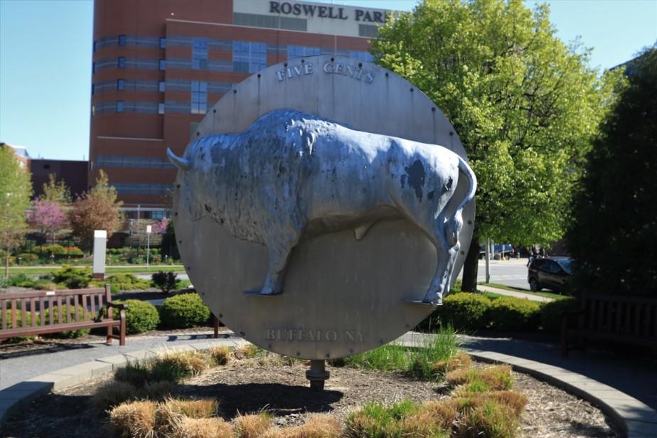 2017 05 14 67 Buffalo.jpg