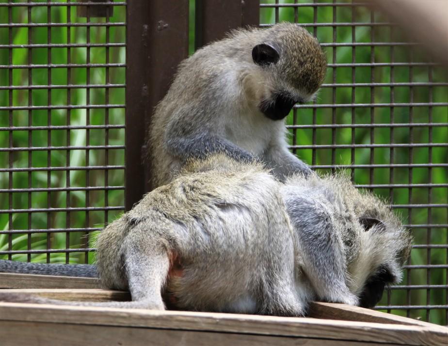 2017 05 28 12 Columbus Zoo.jpg