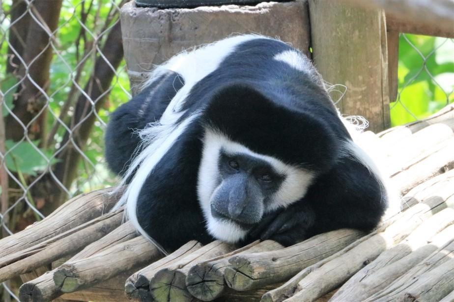 2017 05 28 27 Columbus Zoo.jpg