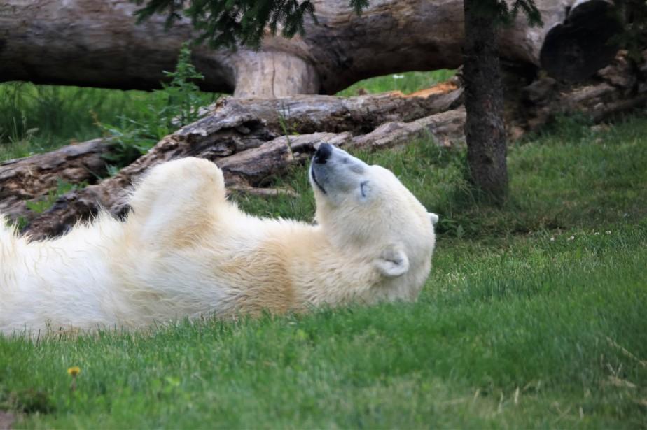 2017 05 28 5 Columbus Zoo.jpg