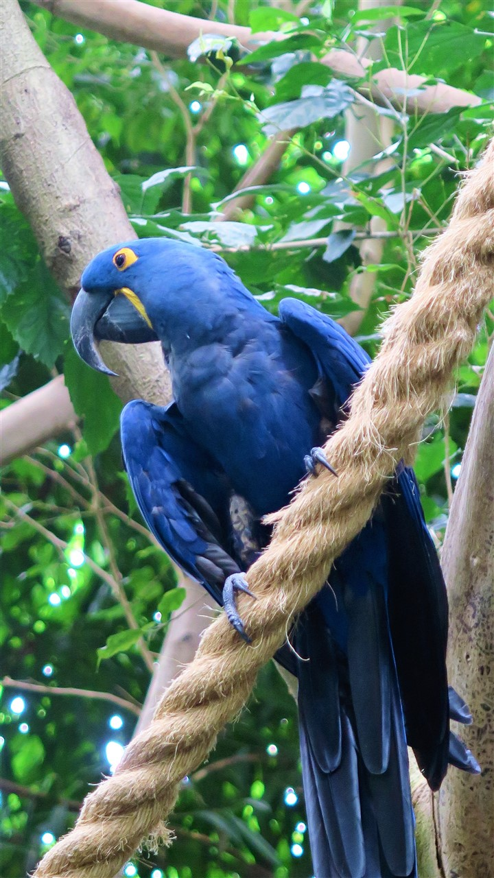 2017 06 30 65 Pittsburgh National Aviary.jpg