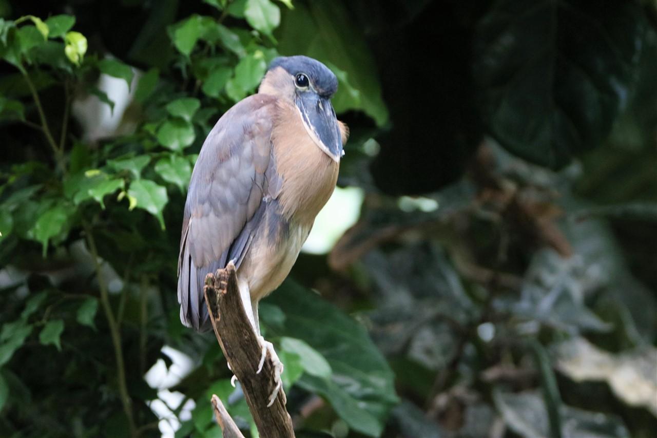 2017 06 30 79 Pittsburgh National Aviary.jpg