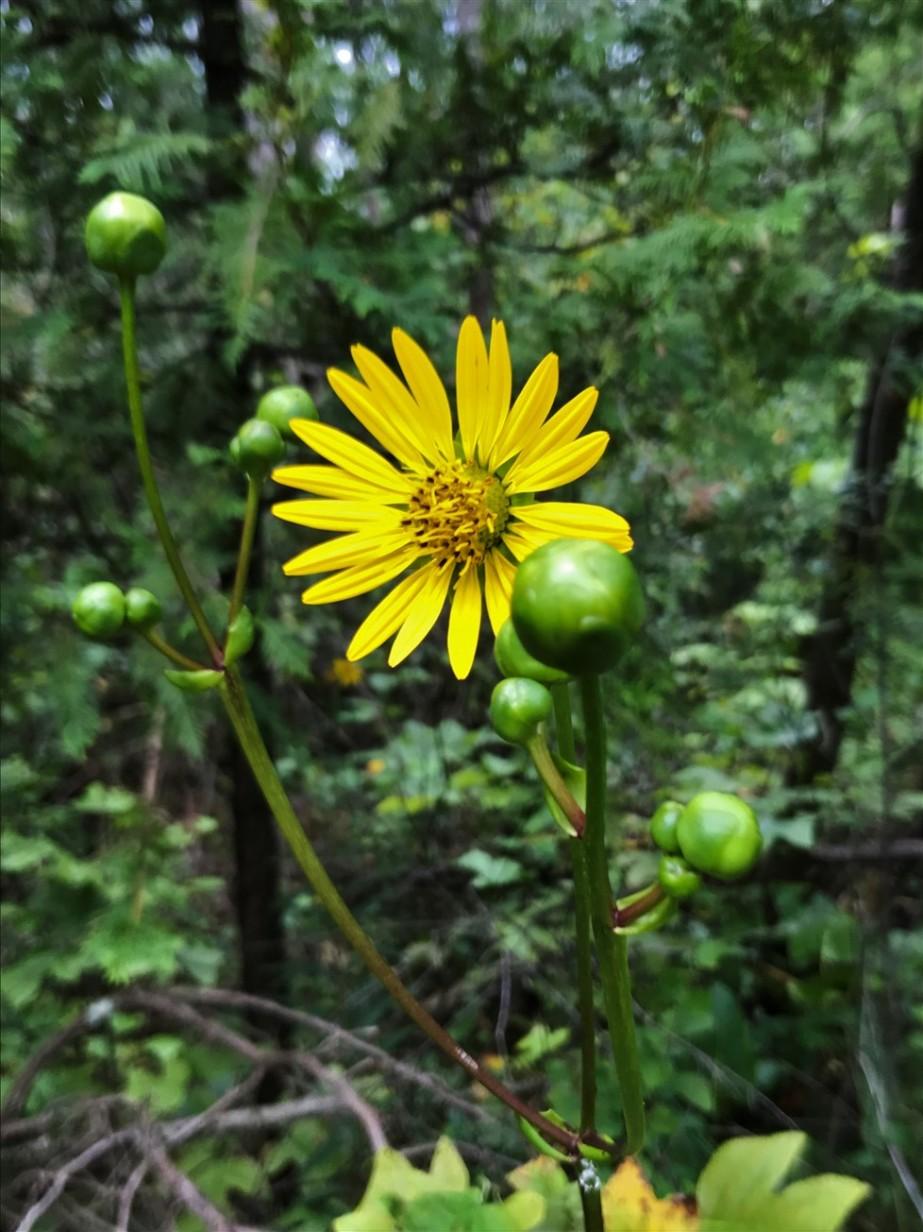 2017 08 06 189 Urbana OH Cedar Bog Nature Preserve.jpg