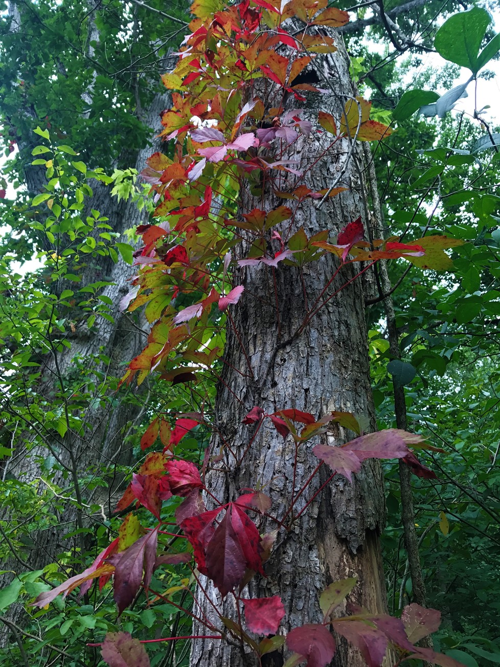 2017 08 06 197 Urbana OH Cedar Bog Nature Preserve.jpg