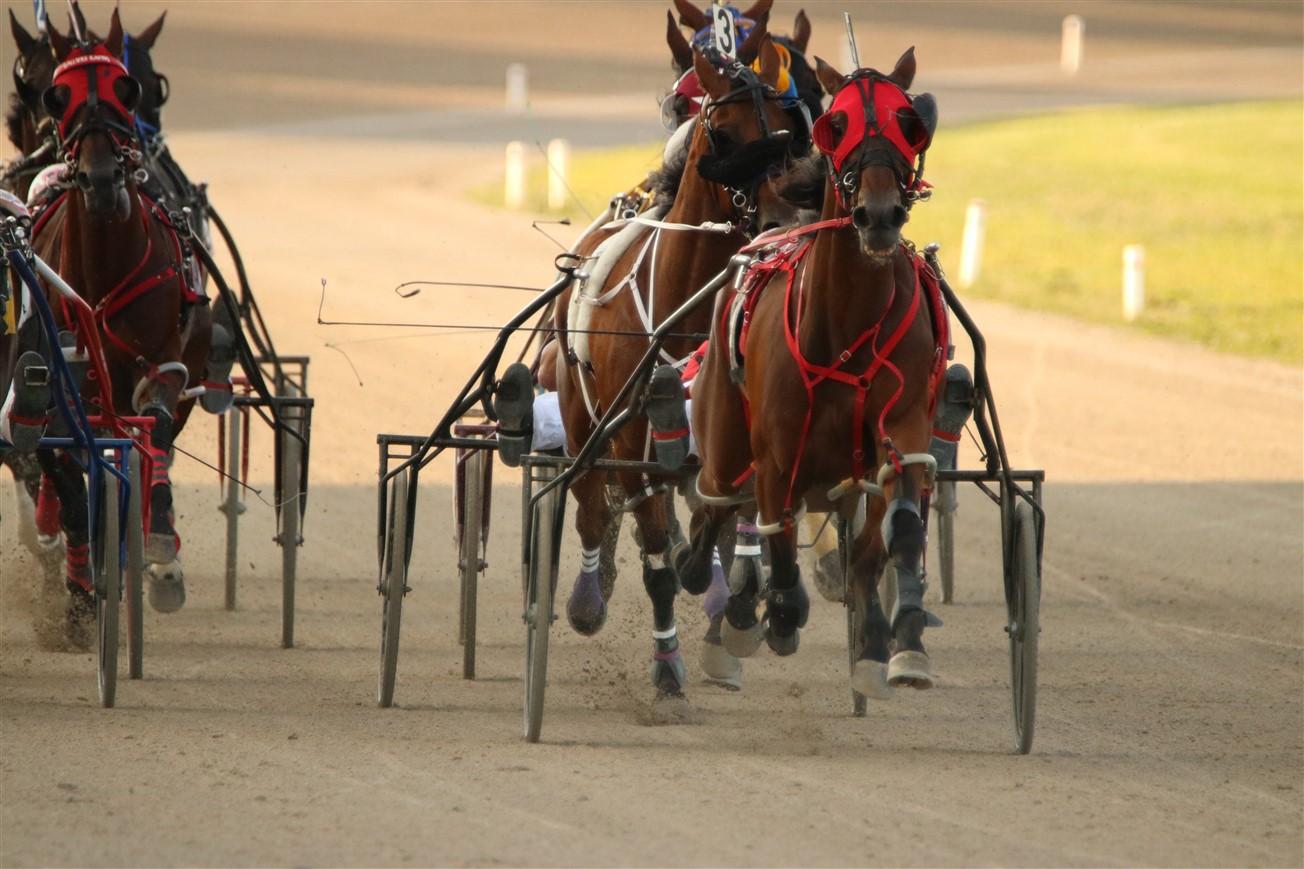 2017 08 12 140 Columbus Scioto Downs Horse Racing.jpg