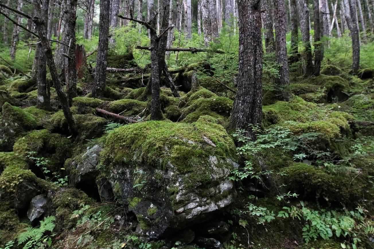 2017 09 15 103 Juneau AK.jpg