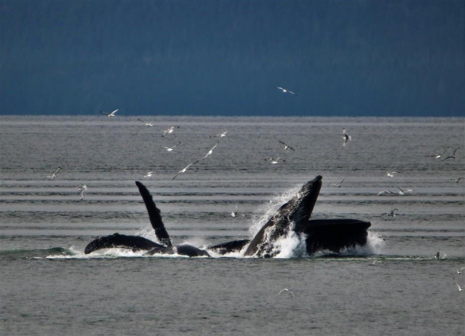 2017 09 18 64 Alaskan Cruise.jpg