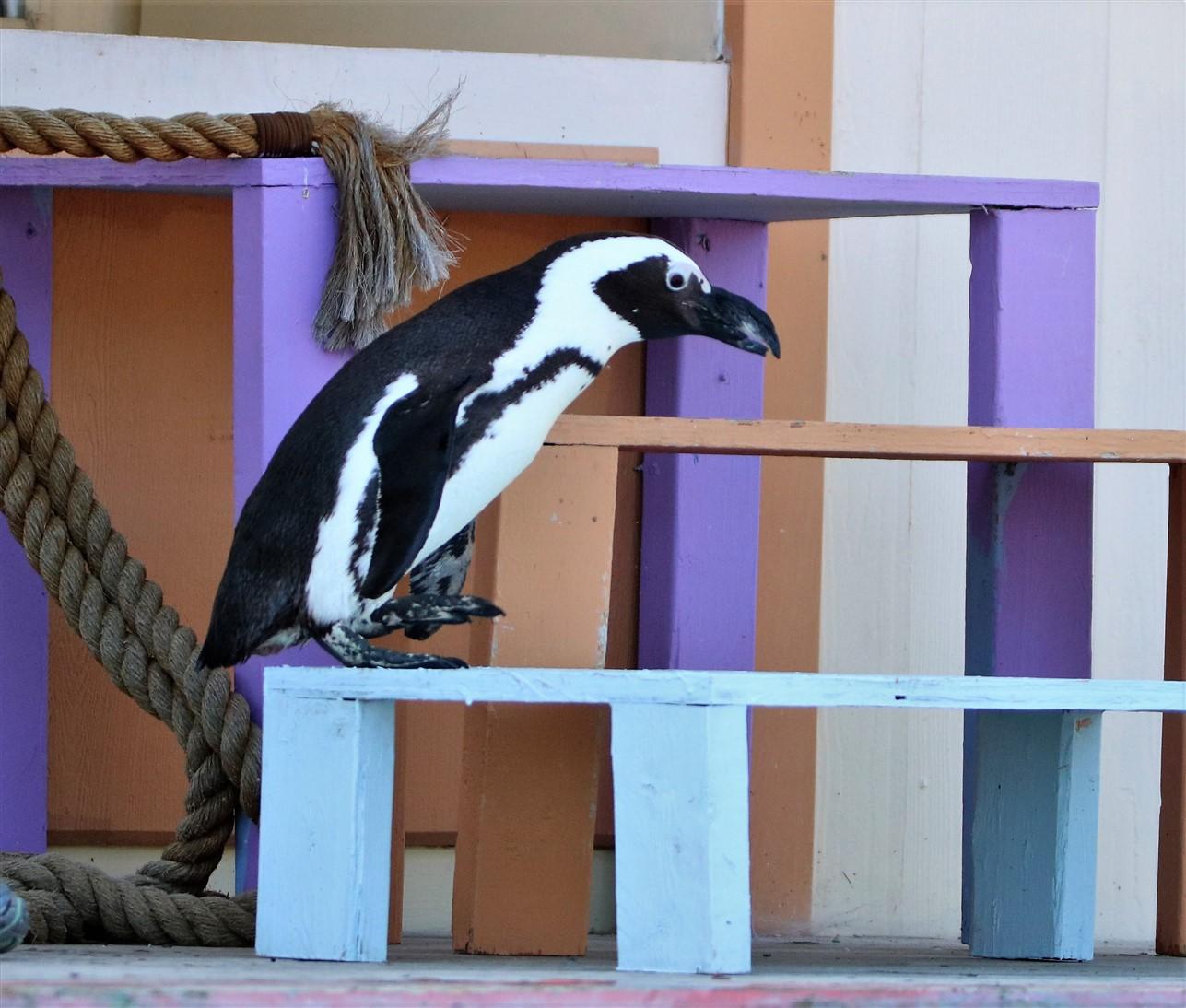 2017 10 01 175 Columbus Zoo.jpg