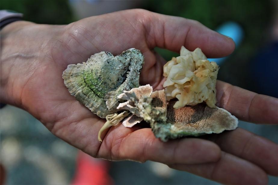 2018 07 01 35 Delaware OH Gallant Woods Park Mushroom Hike.jpg