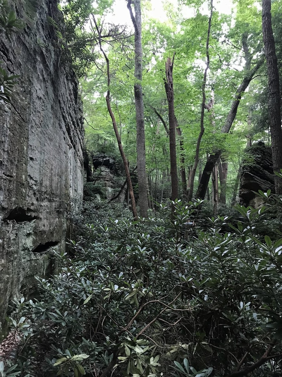2018 07 22 92 Lancaster OH Rhododendrum Cove Nature Preserve.jpg